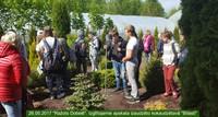 7. klašu izglītojamie piedalās mācību ekskursijās dažādos Dobeles novada uzņēmumos un ražotnēs